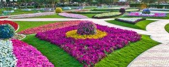 В ОАЭ открыт самый большой в мире цветник