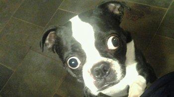 Пес с самыми большими глазами
